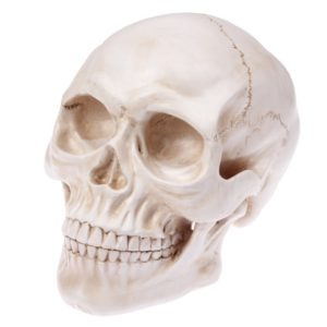 Skull Head Hallowmas Prop Gadget Display, Size: 19(L) x 13(W) x 14cm(H)(White)